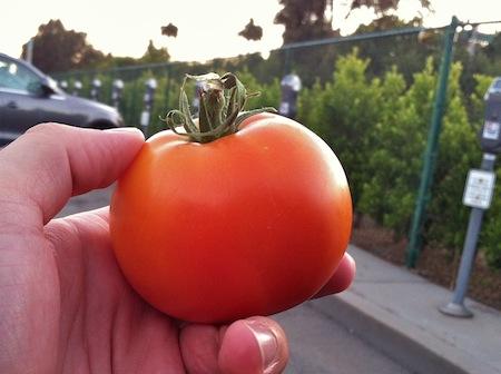 ripe-red-tomato