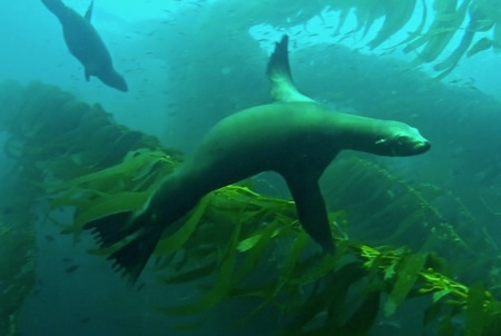 Sea-lion-nose-to-tail