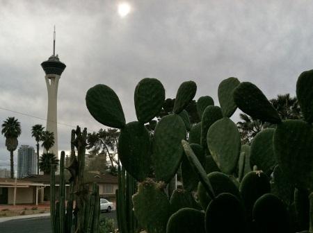 Stratosphere-Las-Vegas-Cactus