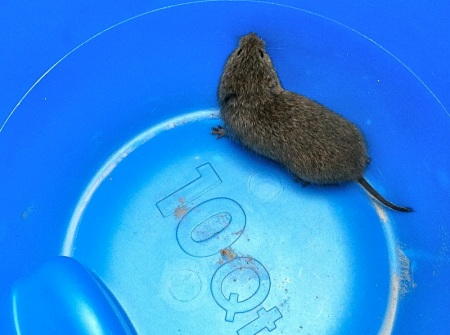 mouse-in-blue-bucket
