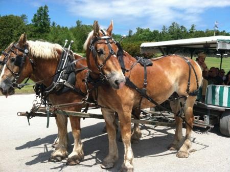 horses-mackinac-island