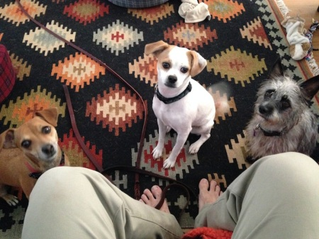 Three-Small-Dogs-Scooter-Molly-Pepper