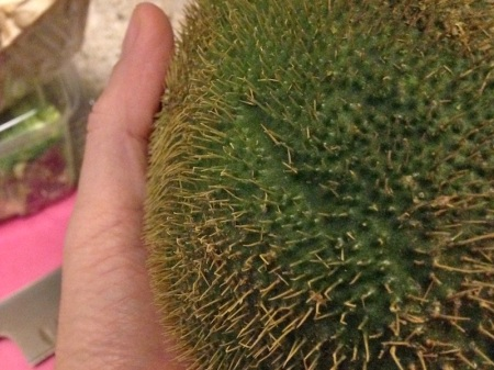 thorny-chayote-spiny-up-close