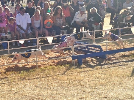 racing-pigs-hurdle