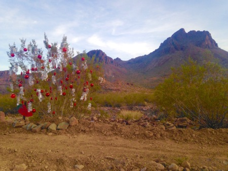 christmas-shrub-oatman-arizona