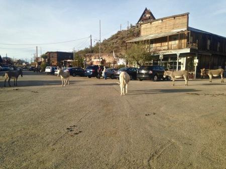 oatman-arizona-donkeys
