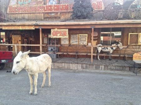 two-donkeys-oatman-arizona