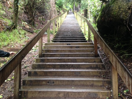 dipsea-stairs-mill-valley