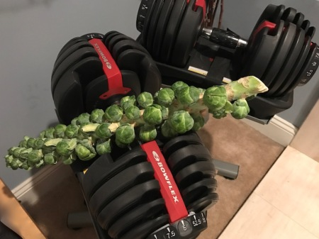 selecttech-brussels-sprouts-stalk