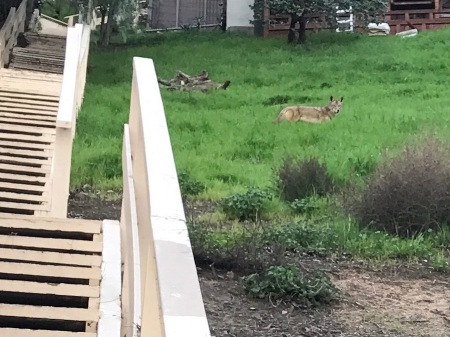 coyote-eldred-stairs